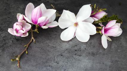 Wunderschöne blühende Magnolien - anthrazit