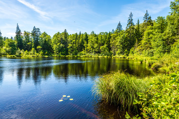 scenic forest lake in sunny summer day with green foliage and shadows
