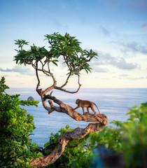 Monkey on the tree. Animals in the wild. Landscape during sunset. Kelingking beach, Nusa Penida, Bali, Indonesia. Travel - image