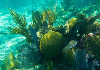 Scarlet Brain Coral, Sea Rods, Sea Fans