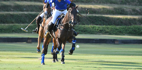 horse speed in polo match.