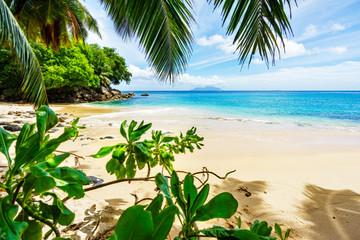 Paradise Beach on the seychelles through palm leaves