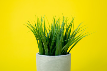 Grassy plant in concrete planter on bright yellow background.