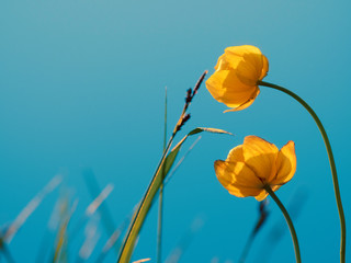 Beautiful yellow flowers on the background of the lake