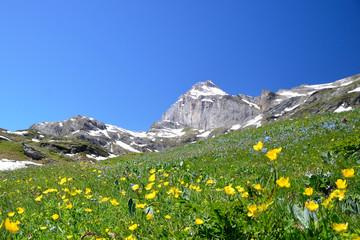 kwiaty w górach