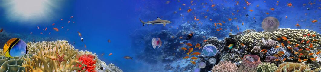 Podwodny świat - panorama