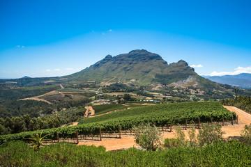 Beautiful landscape of Cape Winelands, wine growing region in South Africa