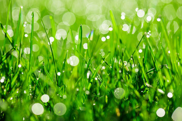green grass with water drops in sunlight