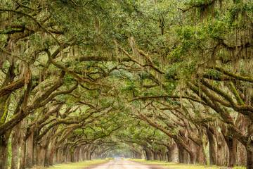 Tunnel of Live Oak Trees in Savannah, Georgia