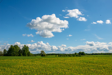 bright green meadow in sunny day in countryside