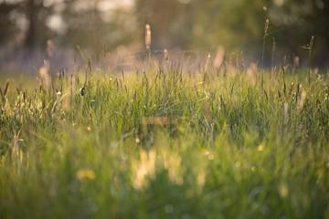 Wiosenna łąka pod światło z trawami, pajęczynami, słonecznymi blikami i kroplami rosy