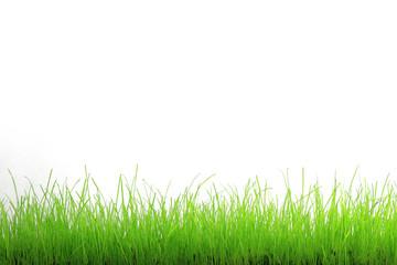 Trawa zielona na białym tle.