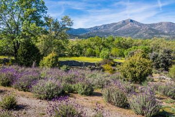 Sierra de guadarrama spring landscape. Madrid Spain