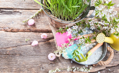 Garden, spring seedling on wooden background