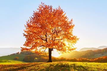 Na trawniku porośniętym liśćmi w wysokich górach jest samotne ładne, bujne, silne drzewo, a promienie słoneczne świecą przez gałęzie na tle niebieskiego nieba. Piękna jesienna sceneria.