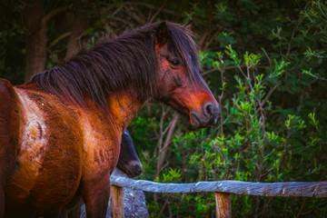 bonito cavalo castanho selvagem em perfil