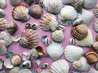 Seashells as background, sea shells pattern