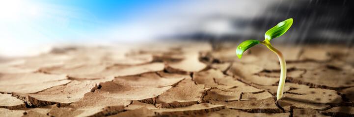 Roślina rosnąca w gorącej suchej pustyni ze słońcem i burzą deszczową nadchodzącą na horyzoncie - nowa koncepcja życia / nadziei