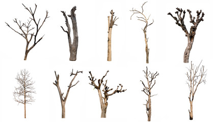 isolated Dead tree Collection on White Backdrop