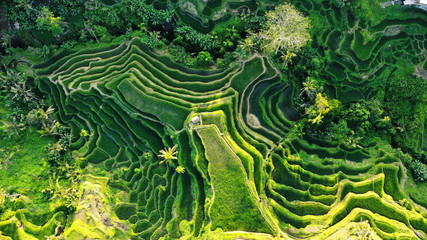 Top view aerial rice terraces