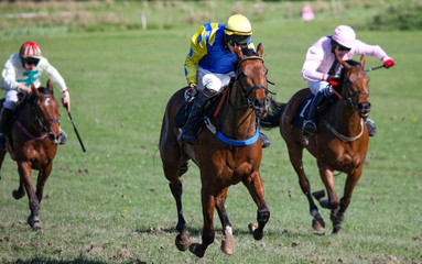 Lead race horse galloping towards the finish line