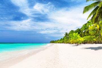 Coconut Palm trees on white sandy beach.
