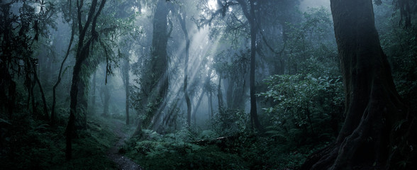 Deep tropical forest in darkness