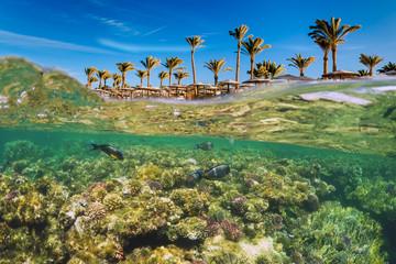 Cudowny i piękny podwodny świat z koralowcami i tropikalnymi rybami.