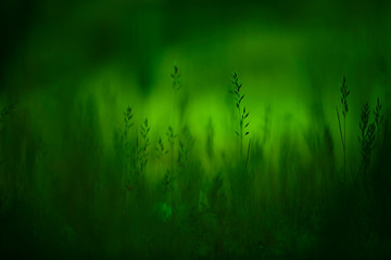 Artistic green colored blurry grass meadow.