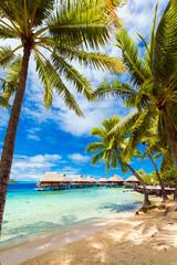 Widok na piaszczystą plażę z palmami, Bora Bora, Polinezja Francuska. Pionowy.