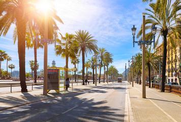 Barcelona, Hiszpania. Droga dla transportu publicznego i aleja palm. Słoneczny letni dzień. Krajobraz ulicy miejskiej z dworca autobusowego.