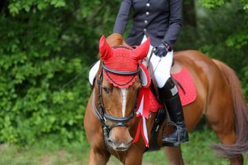 Head shot closeup of a beautiful award winner racehorse