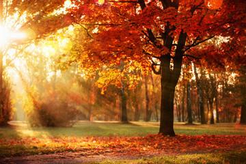 Jesienny krajobraz. Scena upadku. Drzewa i liście w promieniach słońca