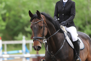 Portrait of beautiful show jumper horse in motion on racing track