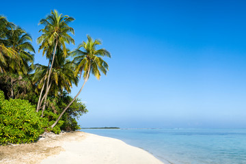 Beautiful tropical island with palm trees as background image