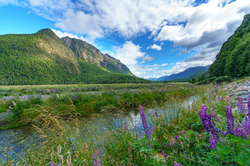 meadow with lupins on a river between mountains, new zealand 3