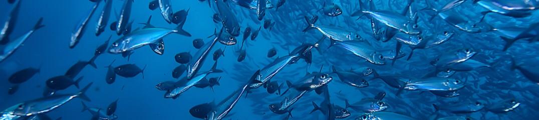 pod wodą ocean / krajobraz podwodny świat, scena niebieska idylla przyroda