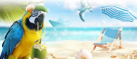 Papagai im Urlaub am Strand
