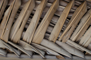fondo con patrón de hoja de palmera