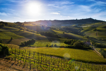Vineyards and woods on the Sarmassa hillside site in the Municipality of Barolo Piedmont Italy