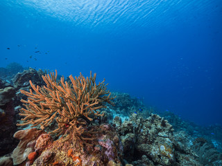 Seascape of coral reef in the Caribbean Sea around Curacao with coral and sponge