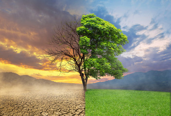Dead and alive tree in a split of crack wasted land and green meodow field a concept of climate change and global warming