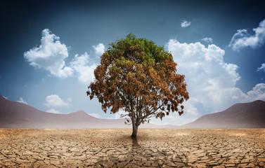 Sucha krakingowa ziemia z martwym drzewem i niebem w tle pojęcie zmiany klimatu i globalnego ocieplenia