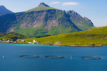Salmon farming, fish farm in the sea