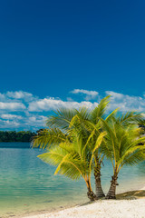 Tropical resort destination in Port Vila, Efate Island, Vanuatu, beach and palm trees