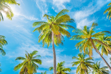 Green palm trees on background of blue sky and white clouds