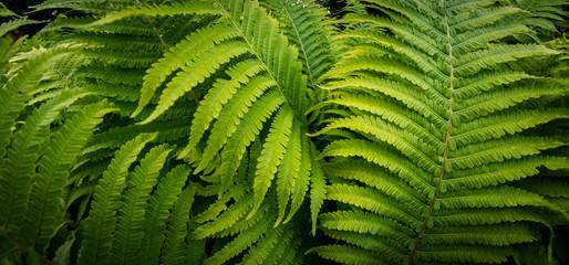 Tropikalny paprociowy rośliny dorośnięcie w ogródzie botanicznym z ciemnego światła tłem