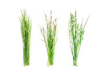Set of wild green grass on white background.