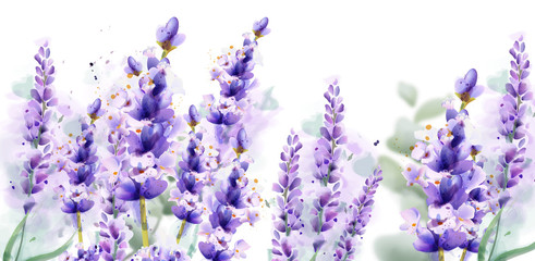 Lavender watercolor background Vector. Delicate floral bouquet on white background. Spring summer banner templates