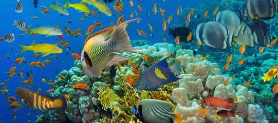 Koral i ryby